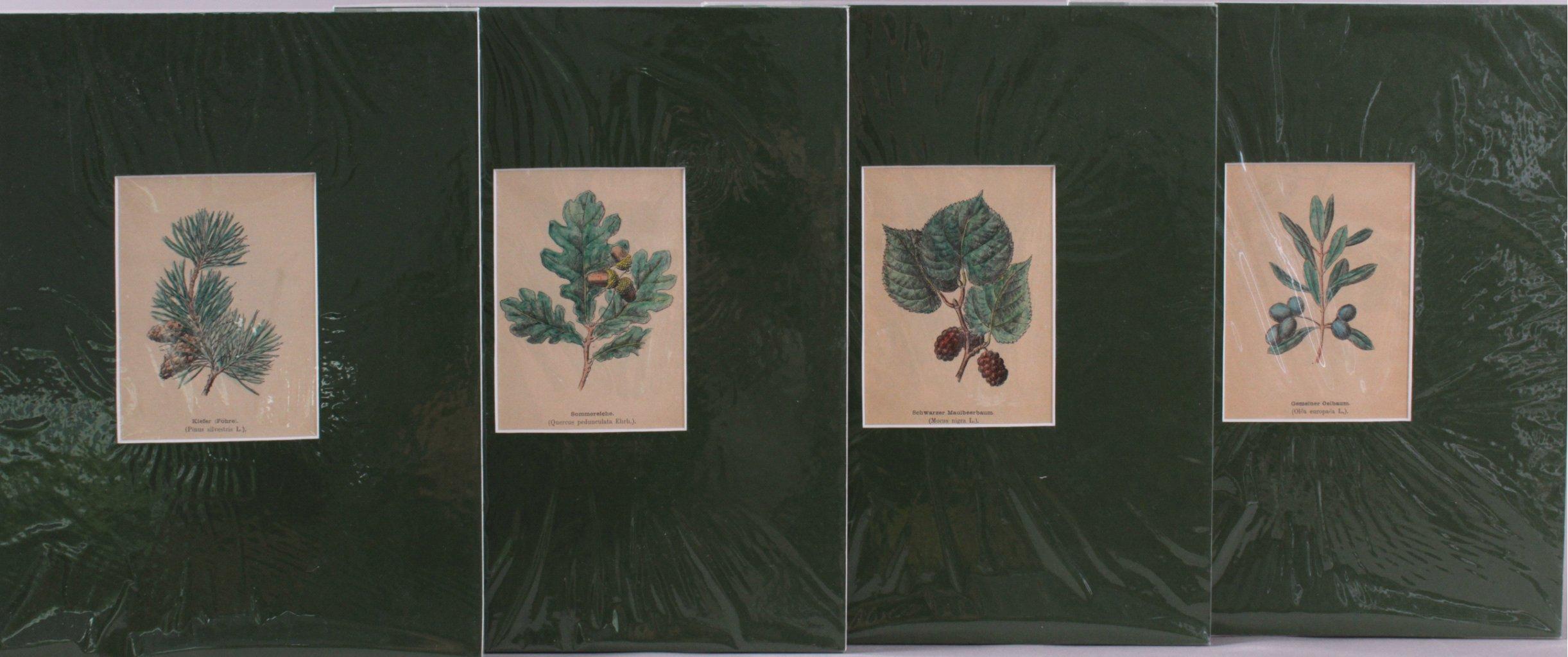 4 kolorierte Lithographien um 1880