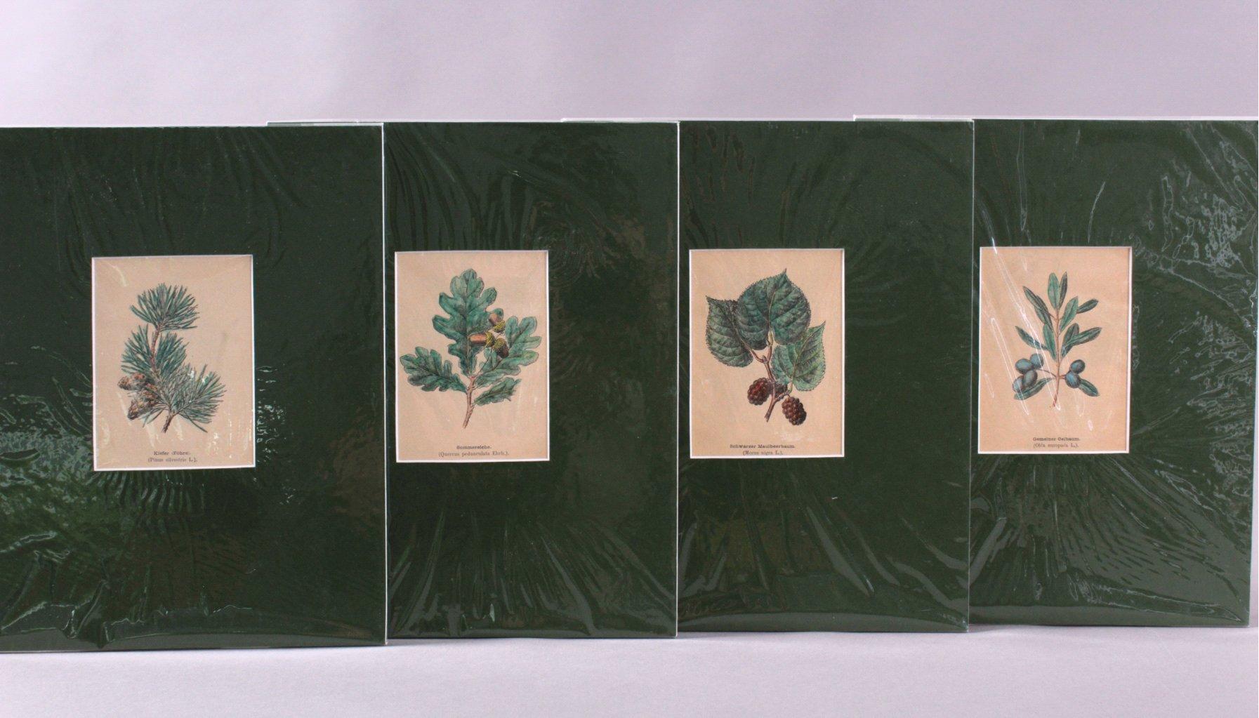 4 kolorierte Lithographien um 1880-1