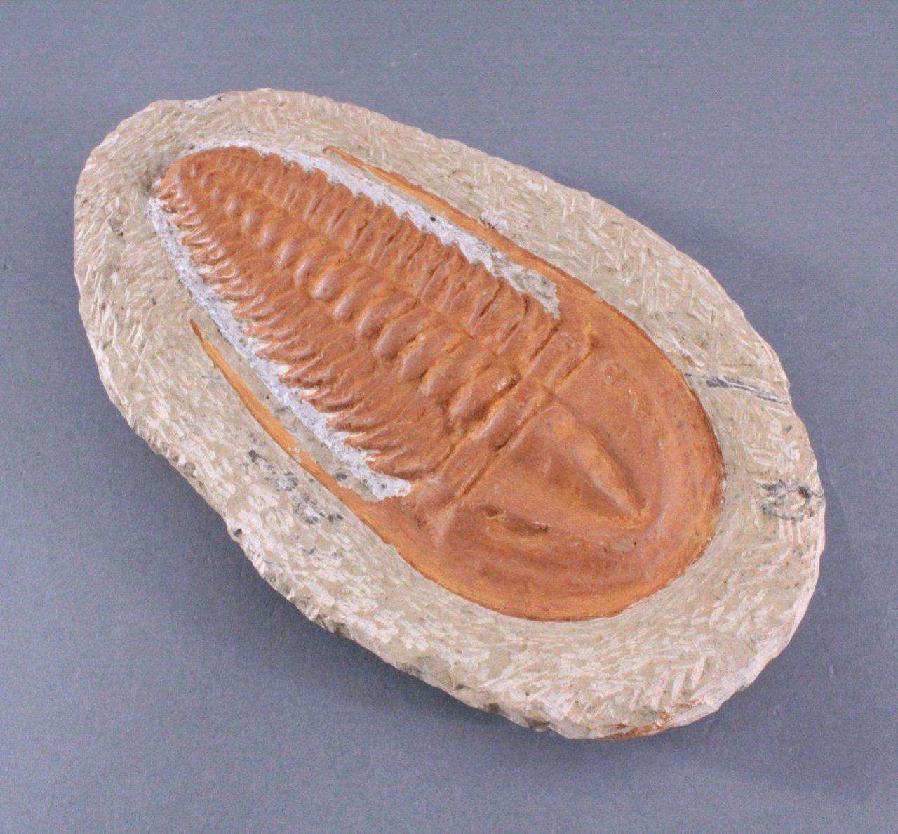 Trilobit in Muttergestein