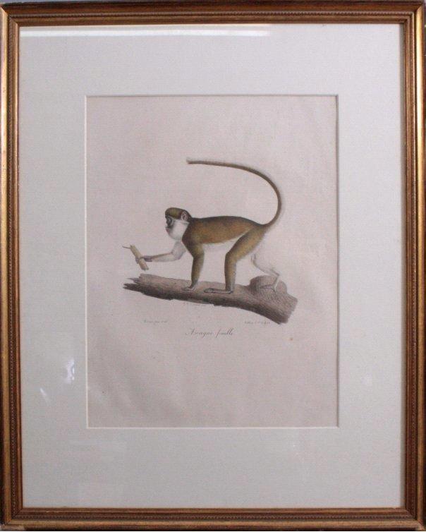 """C. Last, Franz. Lithographie """"Ascagne femelle"""""""