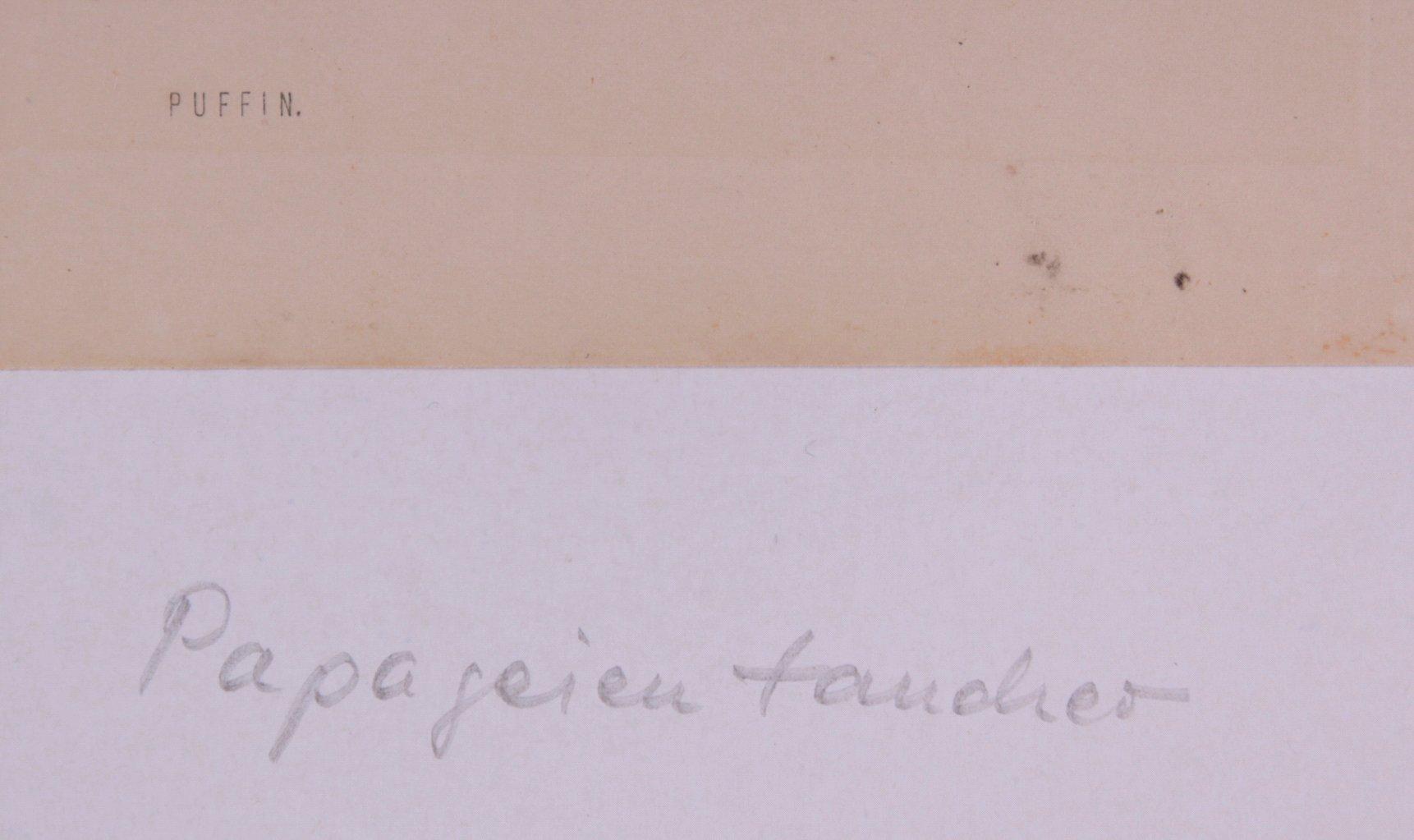 """F.O. Morris """"Vögel""""-3"""