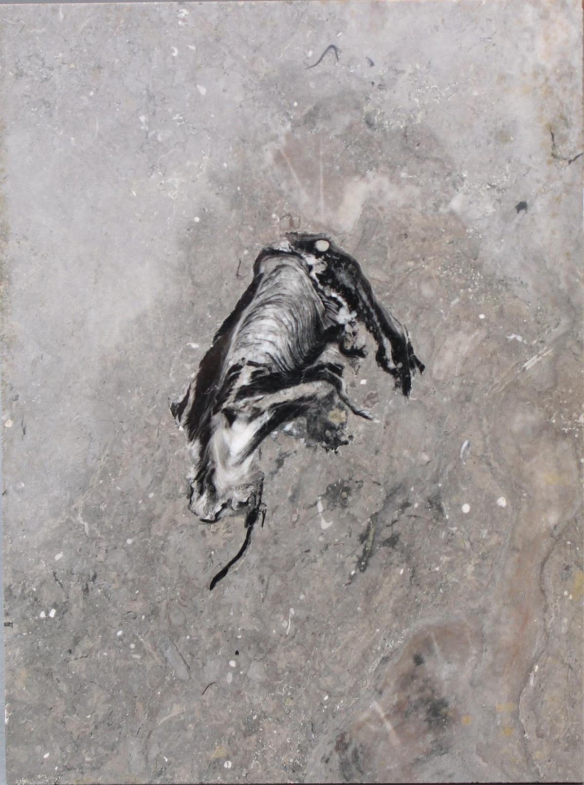 Museales Fossil eines Frosches-2