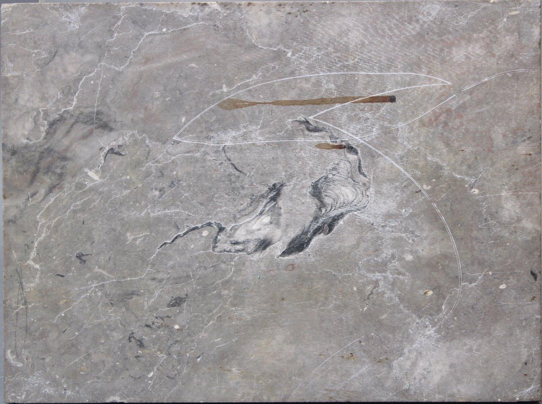 Museales Fossil eines Frosches-4