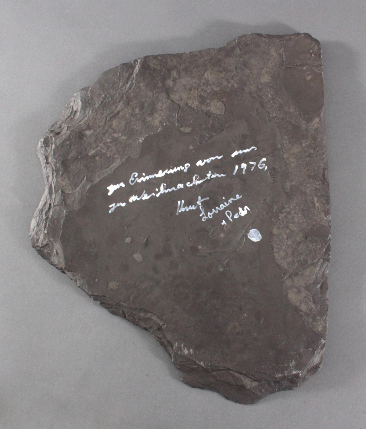 Fossilienplatte Ammonit-5