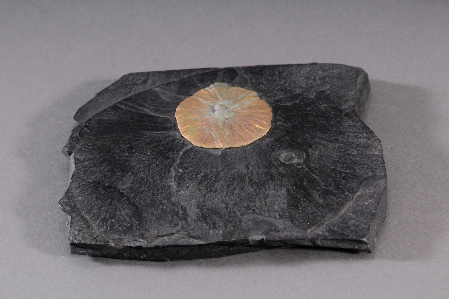 Pyrit-Sonne auf Oelschiefer, Illinois USA-2