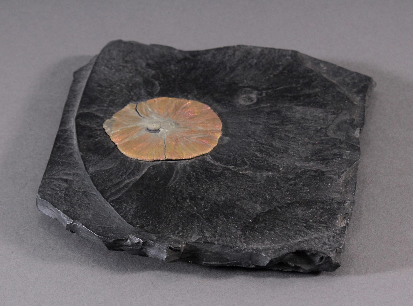 Pyrit-Sonne auf Oelschiefer, Illinois USA-3