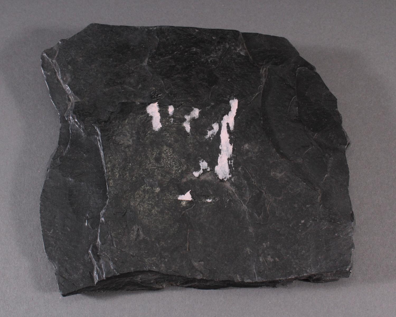 Pyrit-Sonne auf Oelschiefer, Illinois USA-5
