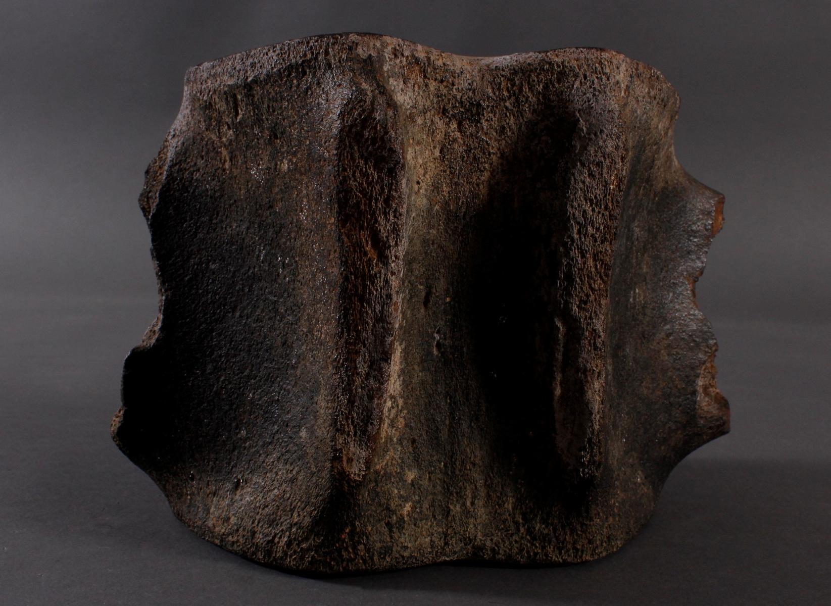 Großer Walwirbel aus dem Brustbereich-2