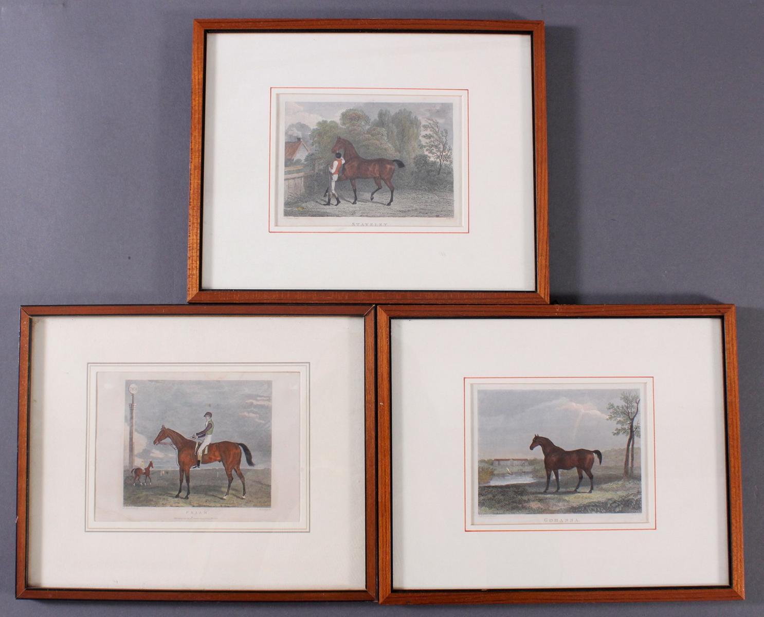 Drei Lithographien zum Thema Pferde