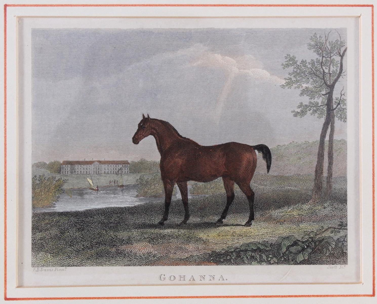 Drei Lithographien zum Thema Pferde-2