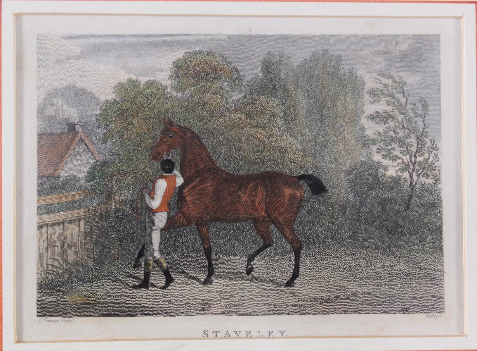 Drei Lithographien zum Thema Pferde-4
