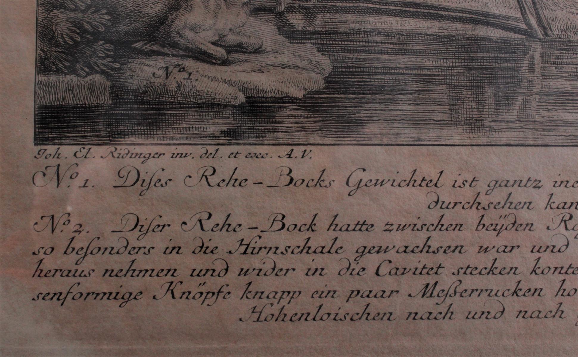 Martin Elias Ridinger (1730 – 1780) Augsburg-3