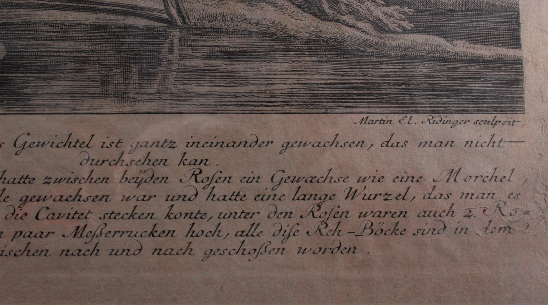 Martin Elias Ridinger (1730 – 1780) Augsburg-4
