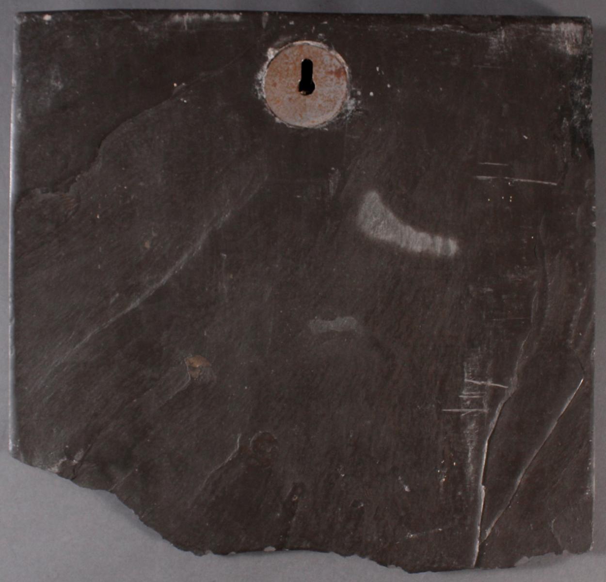 Große Schieferplatte mit Fossil 'Ammoniten'-3
