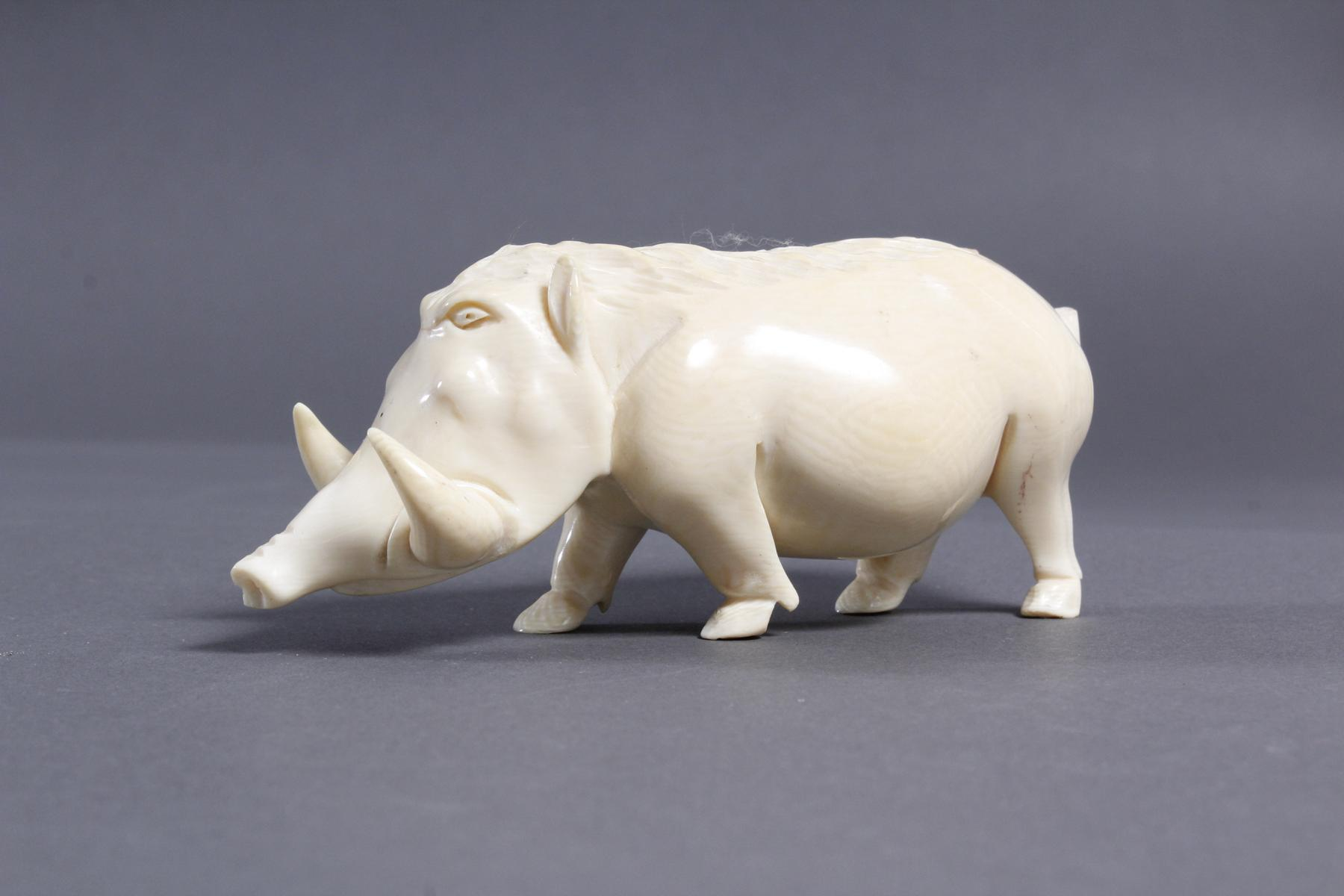 Elfenbein Warzenschwein, Afrika um 1930