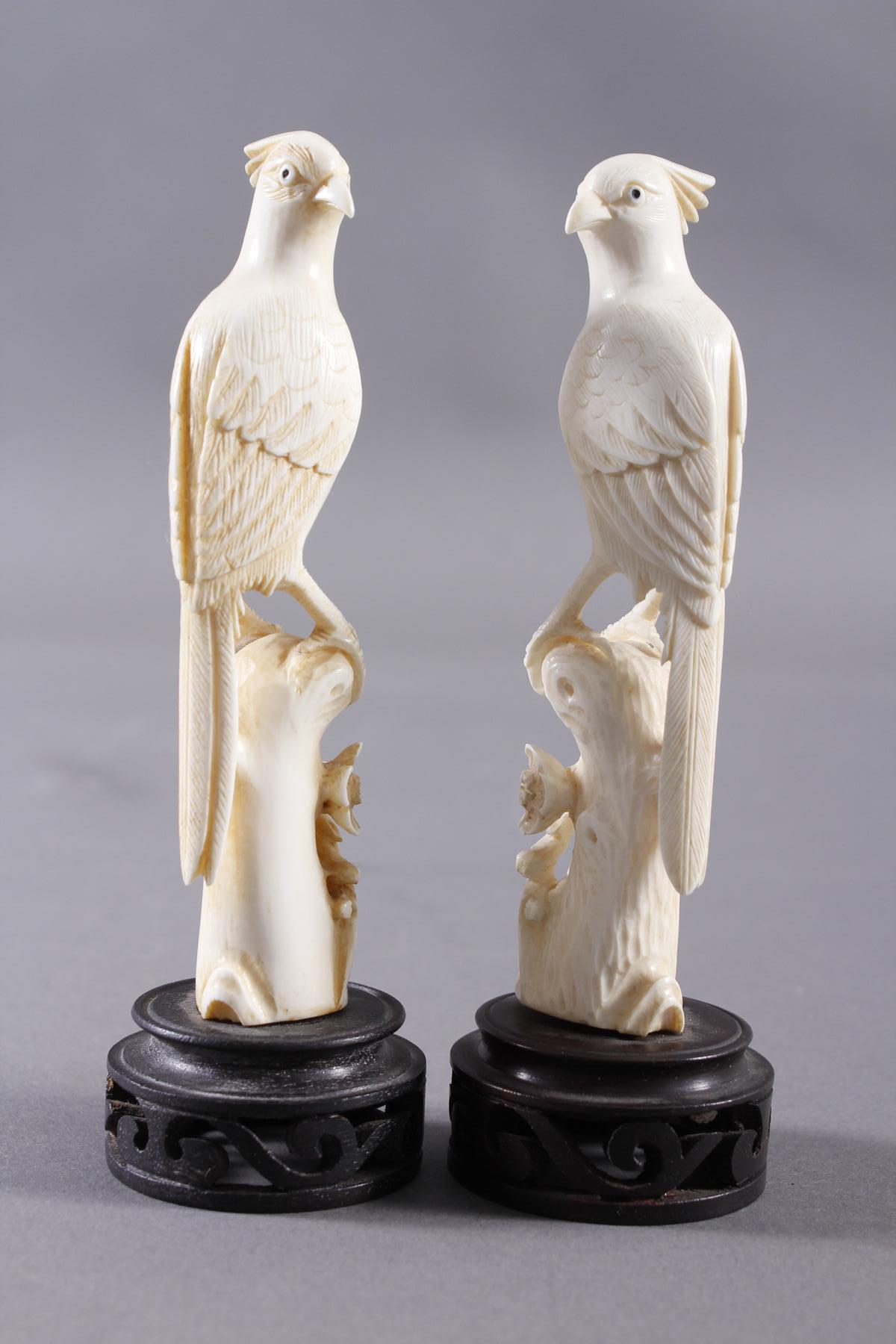 Elfenbein, Paar Paradiesvögel auf floral gestaltetem Ast, China Anfang 20. Jahrhundert-2