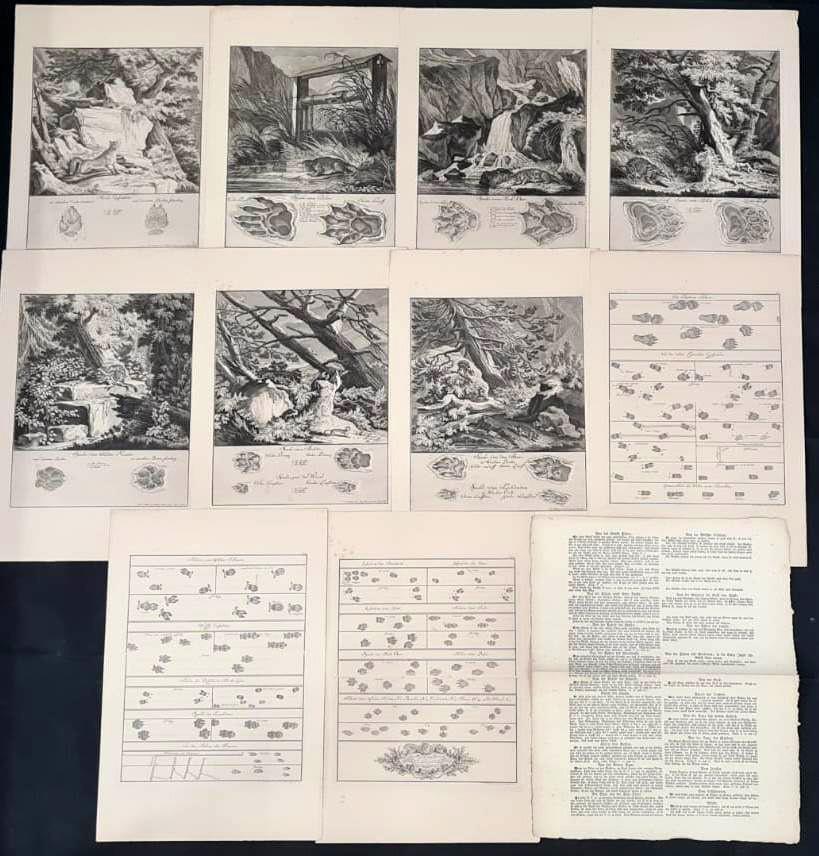 22 Abbildungen der Jagdbaren Thiere mit derselben angefügten Färten und Spuhren von Joh. Ridinger-2