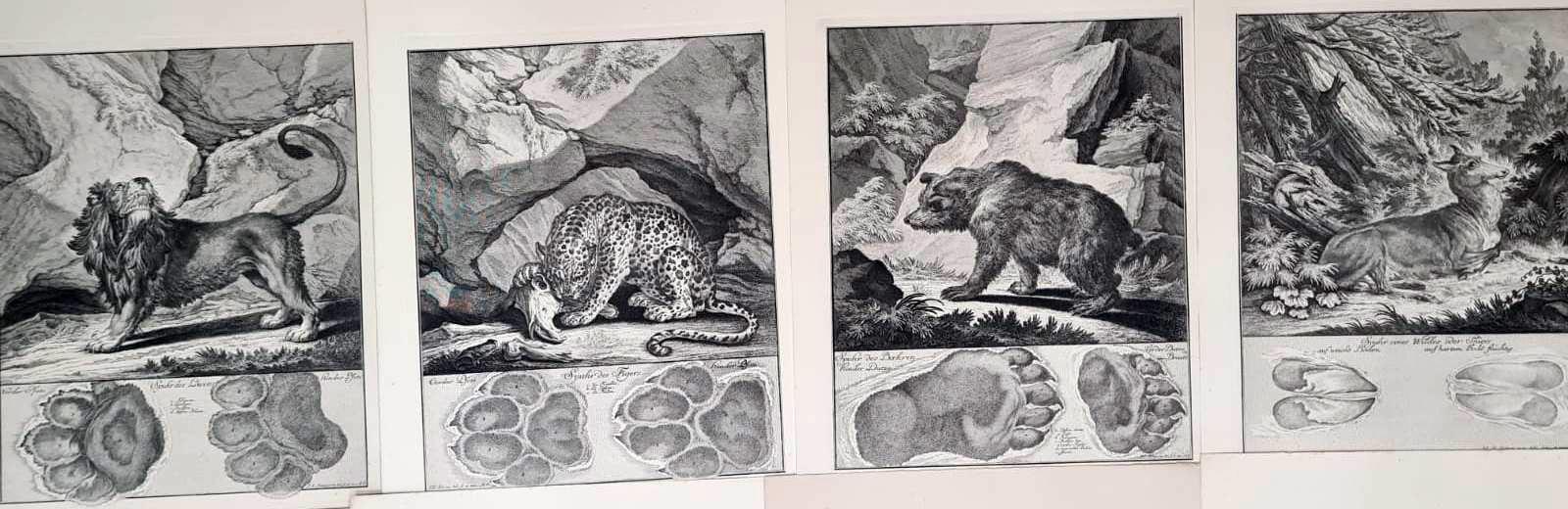 22 Abbildungen der Jagdbaren Thiere mit derselben angefügten Färten und Spuhren von Joh. Ridinger-3