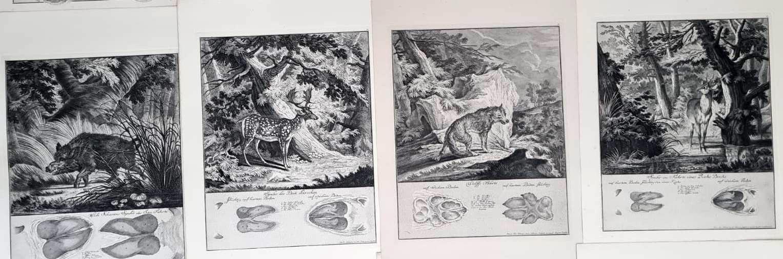 22 Abbildungen der Jagdbaren Thiere mit derselben angefügten Färten und Spuhren von Joh. Ridinger-4