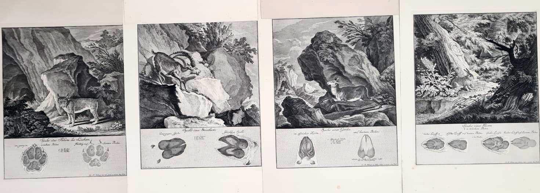 22 Abbildungen der Jagdbaren Thiere mit derselben angefügten Färten und Spuhren von Joh. Ridinger-5