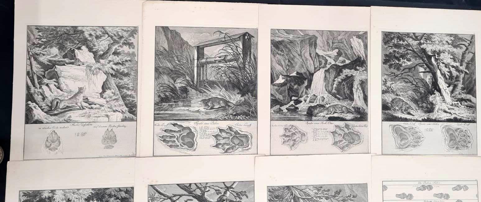 22 Abbildungen der Jagdbaren Thiere mit derselben angefügten Färten und Spuhren von Joh. Ridinger-6