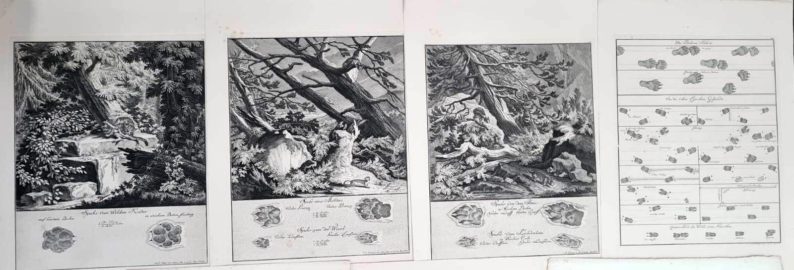 22 Abbildungen der Jagdbaren Thiere mit derselben angefügten Färten und Spuhren von Joh. Ridinger-7