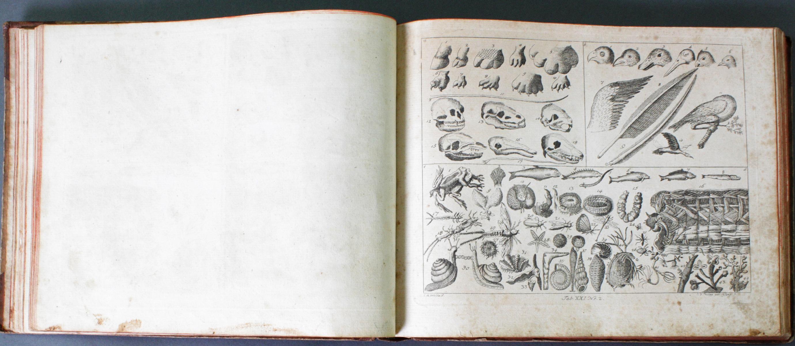 Johann Bernhard Basedow, Kupfersammlung zum Elementarwerk, 1774-5
